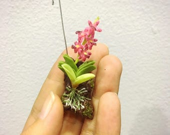 Purple Orchid | Miniature Orchid Flower | Miniature Flower | Orchid Flower | Miniature Vase | Dollhouse Flower | Miniature Garden