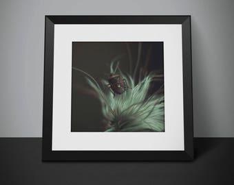 Beetle Digital Photo - Beetle Photo Print - Beetle Photo - Nature Photo - Beetle - Digital Photo - Instant Download