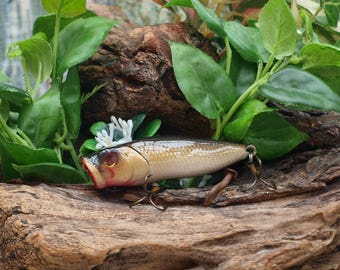 Gold Shiner Top Water Popper