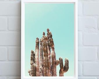 Dreamy Cactus Print, Cactus Art, Cactus Wall Art, Desert Cactus Photo, Cactus Photography, Giclee Art Print