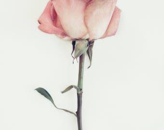 Rose Print, Minimal Print, Pink Rose, Flower Wall Art, Rose Photograph, Chic Print, Simplistic Art, Pink Decor, Trendy Wall Art