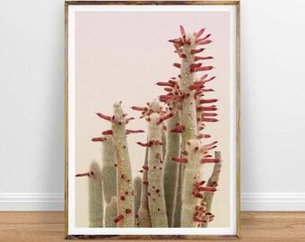 Cactus Wall Art cactus wall art cactus print cactus art desert cactus