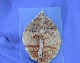 ACEO original painting, lone birch tree