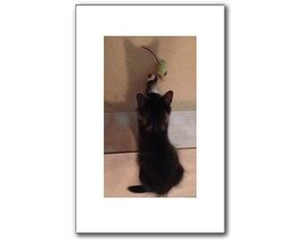 Kitten Print - Pet Portraits - 11 x 17