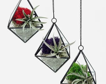 Tranquility Geometric Air Plant Terrarium Kit