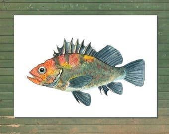 Quillback Fish Illustration, fish painting, nautical wall art, kids room decor