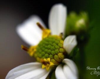 macro flower 20 x 30
