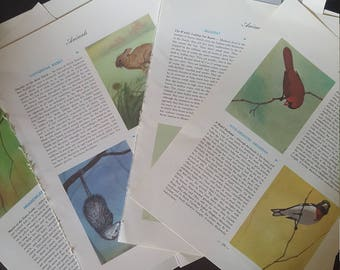 large  vintage book pages