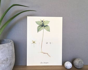 Plant Poster Herbarium Print Vintage Botanical Poster Print Botanical Illustration Chart Plant Illustration Print Herb Print Herb Poster