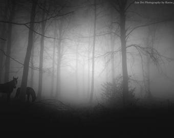 Horse Photography, Fine Art Photography, Black and White Photography, Fine Art Print, Nature, Landscape, Tree, Moonlight, Tree Art, Fog