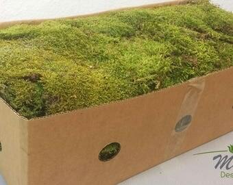 Hydrokultur design loved by 4 etsy shoppers handmade hunt for Hydrokultur design
