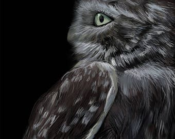 OWL, owl drawing, owl print,  owl illustration, bird print, bird drawing,bird painting, bird illustration, bird art print, gray white bird