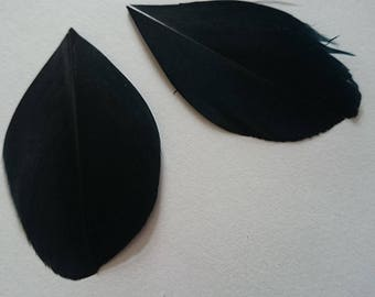 SET of 10 feathers ± 42 x 22 64x38mm