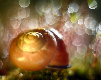A4 print of Snail Shell and colourful background bokeh