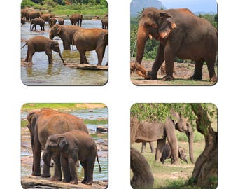 Set of 4 Elephant drinks coasters featuring award winning photography by UniquePhotoArts.