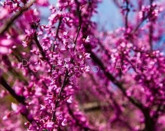 Flowering tree in garden, colors, nature, photography, digital download