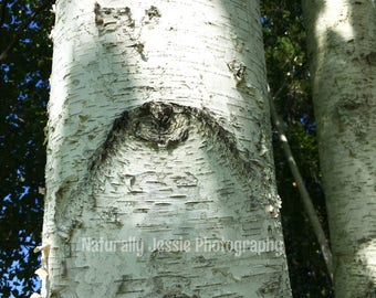 Ancient Eye on the White Birch Tree
