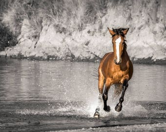 Riverrun, Salt River, Wild Horses, Arizona, Wildlife Photography, Horses, Salt River Wild Horses, Selective Color
