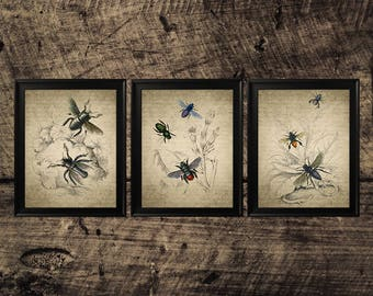 Insect vintage print, bee room decor, insect wall decor, bees instant download, printable bee art