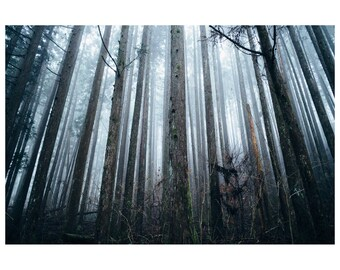 Japan - Forest - Photo Print