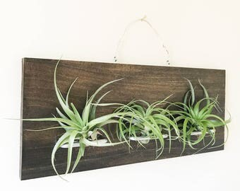 Air Plant Holder Wood Wall Mount with 3 Air Plant Holders in Silver