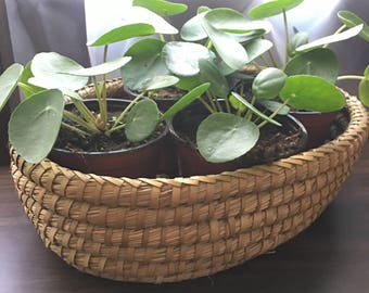 Oval Woven Basket Tray Planter