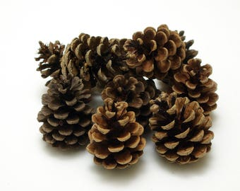 Pine cones 10 pcs, christmas wreath cones, dry natural cones, floristic decoration, wedding decoration, small cones, rustic craft cones #3