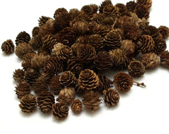 Larch cones 100 pcs, christmas wreath cones, dry natural cones, floristic decoration, wedding decoration, small cones, rustic craft cones #6