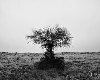 Frozen Tree Photograph on Metal Print, fine art photography, photography, metal prints, wall art, decor, Texas, West Texas, black and white