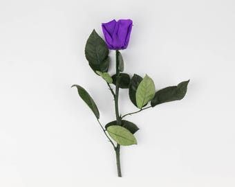 Purple Long Stem Roses, Forever Roses, Real Preserved Purple Rose, Eternity roses that lasts a year, Beauty and the beast rose, Purple Roses