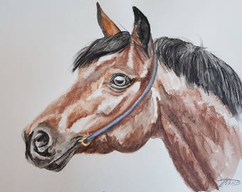 Bay Horse Watercolour