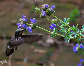Close up of a humming bird