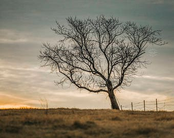 Lonely Tree Landscape Fine Art Photography Wall Art
