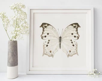 Butterfly Print, Wall Art, Nature Photography, Neutral, White, Large Wall Art, Butterfly Art, Natural History Art, Insect Art Print