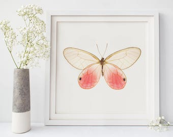 Pink Butterfly Photo, Insect Art, Butterfly Room Decor, Natural History Print, Insect Wall Art, Glasswing Butterfly