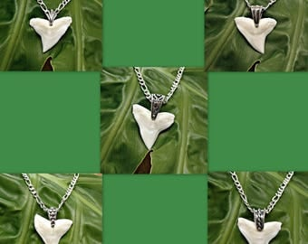 """SALE Genuine 1"""" + 26mm Bull Shark Tooth Necklace Pendant on Sterling Silver Figaro 080 Chain 16"""", 18"""", 20"""", 24"""", 30"""" Sharks Teeth"""