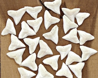 SALE 25 Pc Lots 1 inch 25mm Up Great BULL Sharks Teeth White Upper Jaw Shark Tooth