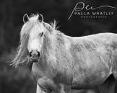 horse art, black white horse, horse portrait, horse photo, Horse Art Print, white horse print, Horse Photography, black white horse art