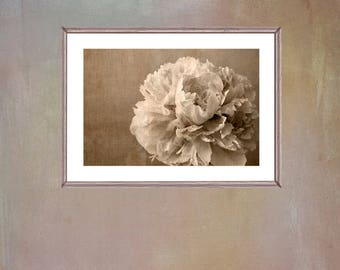 Large Printable Peony Art, Sepia Photography, Rustic Farmhouse Decor, Peony Flower Poster, Floral Art, Neutral Wall Art