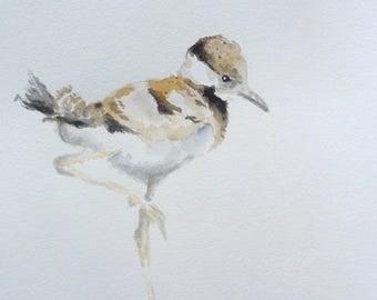 Sandpiper watercolor painting baby bird Nursery art shorebird chick