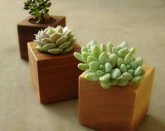 Cube Shaped Wood Succulent Planters, Modern Succulent Pots, Gardener Gift, Home Decor, Set of Three