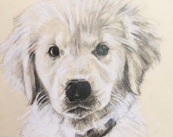Dog Portrait Custom Sketch, 8x10