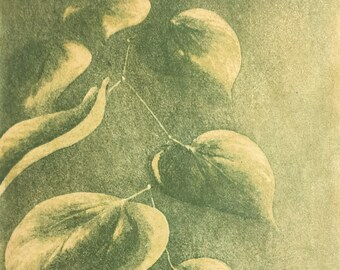 Redbud Leaves Fine Art Reduction Print