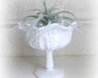 Vintage Milk Glass Footed Vase Planter Succulent Pot