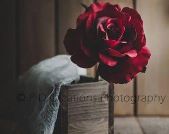 Moody Red Rose