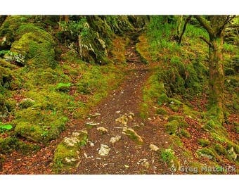 "Fine Art Color Photography of Mossy Forest Landscape in Ireland ""Reenadina Wood 3"""