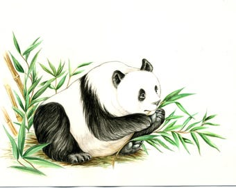 original art children's book illustration Panda bear eating bamboo