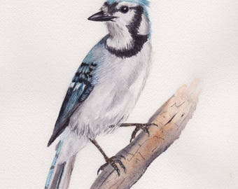 Blue Jay 8x10 Watercolor Painting, Blue Jay, Bird,bird painting,nature,bird lover,wildlife,Animal,not a print,made in ohio,bird art