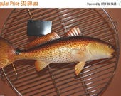 "12% OFF 1, 11"" Redfish, Replica Redfish, Ready to mount, fish mount supplies, fish to make a trophy mount, fish trophy mount supplies,#28"