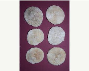 15% OFF 6 Preserved Mushroom Corals, Sealife, Mushroom coral decor, mushroom corals, framing shells, sea shell accent embellishments